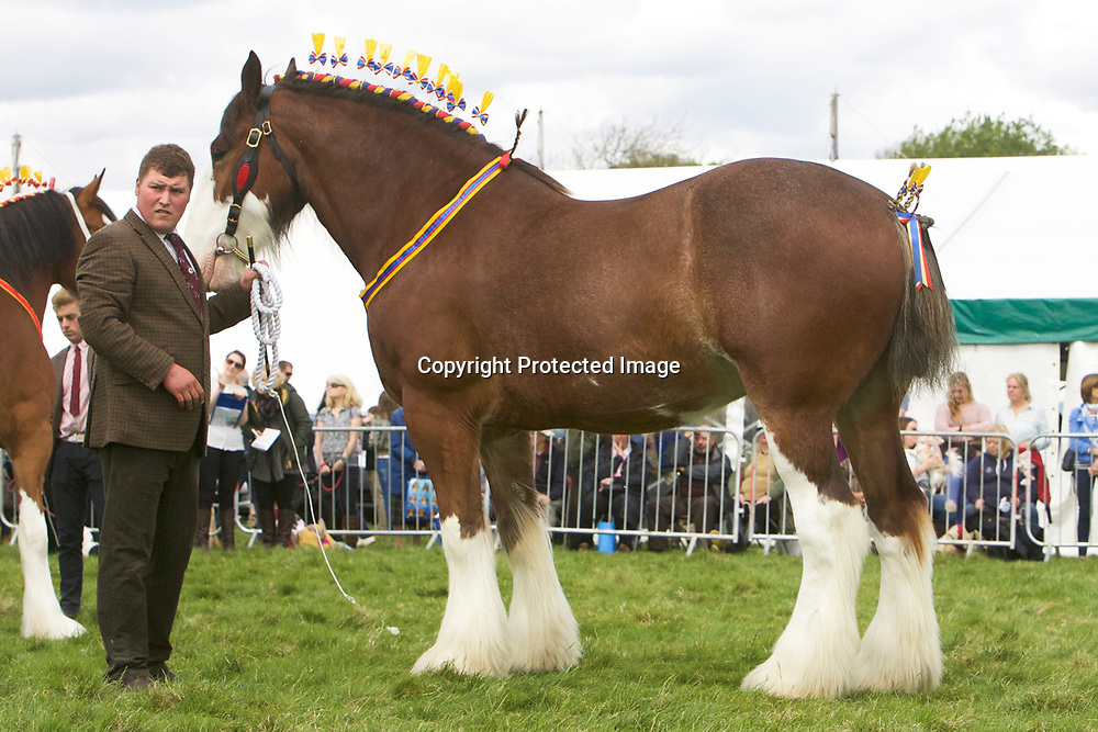 Miss L Parr's VALLIANTS JESTER<br />
