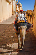 Elephant &amp; driver walking down the ancient cobblestones of the Amber Fort in Jaipur, India. <br /> <br /> Nikon D750 28mm  ISO 1600  f16  1/1250s