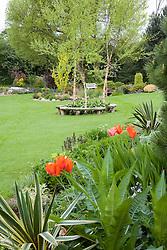 View across garden in spring. Curved bench seats around three birch trees - Betula nigra 'Heritage'