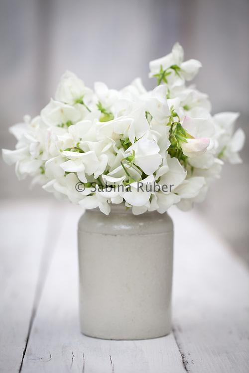 Lathyrus odoratus 'Bramdean' - sweet pea arrangement in small earthenware jar