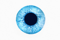 Blue eye on white background