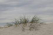 Wild grass grows on the dunes before a cloudy sky on the beach in St. Augustine Beach, Florida.
