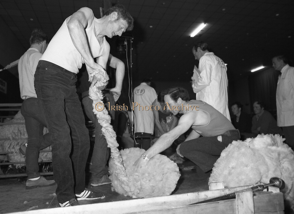 Sheep Shearing and Fleece Rolling Competition. (R57)..1987..07.05.1987..05.07.1987..7th May 1987..The International Sheep Shearing Championship was held today at the RDS in Dublin. A second part of the competition involved the rolling and tying of the fleece once the sheep is sheared...Picture shows the contestants deep in concentration as they roll and tie the fleeces under the watchful eyes of the judges.