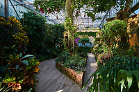 France, Bourgogne-Franche-Comté, Yonne (89), Sens, parc du Moulin à Tan, label «jardin remarquable», la serre tropicale  // France, Burgundy, Yonne, Sens, Moulin à Tan park and garden
