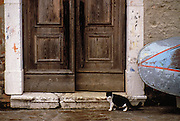 Image of a door detail and cat in the town of Burano near Venice, Italy