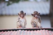cheeky monkey temple hua hin thailand