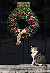 © Licensed to London News Pictures. 05/12/2017. London, UK.  Larry the cat outside 10 Downing Street as the weekly Cabinet meeting takes place. Photo credit: Rob Pinney/LNP