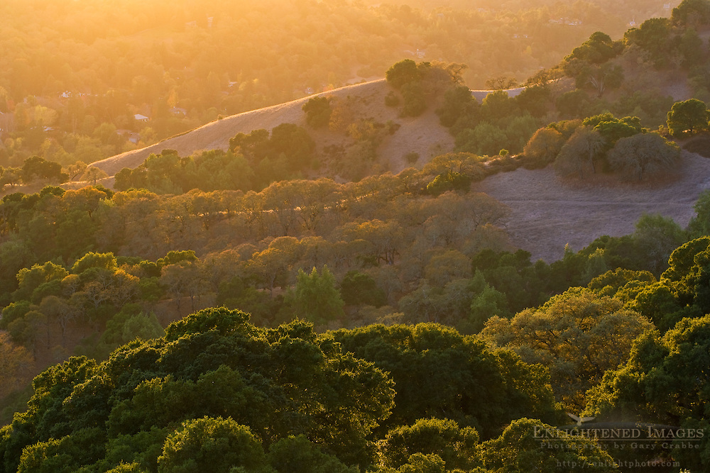Trees at sunset. Briones Regional Park, Contra Costa County, California