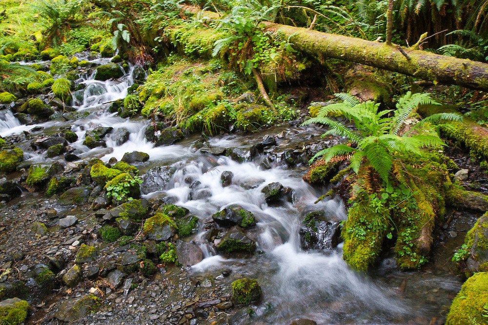 One of many waterfalls along the Hoh River Trail. The Hoh River trail in Olympic National Park starts in the mossy and lush Hoh Rain Forest. From there you climb over 5,000 ft. in elevation along towering trees and rock to overlook the windswept Blue Glacier on Mt. Olympus. Tracing your steps back to the Hoh River visitors center the hike covers over 36 miles of diverse climate and ecosystems ranging from temperate rain forest to alpine.