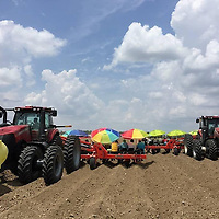 (Courtesy Photo)<br /> Tractors pull 12-row, sweet potato setters across a dry field earlier this summer. Eight-row setters are the norm and the larger implement makes for fewer pulls across a field, cutting cost to producers.