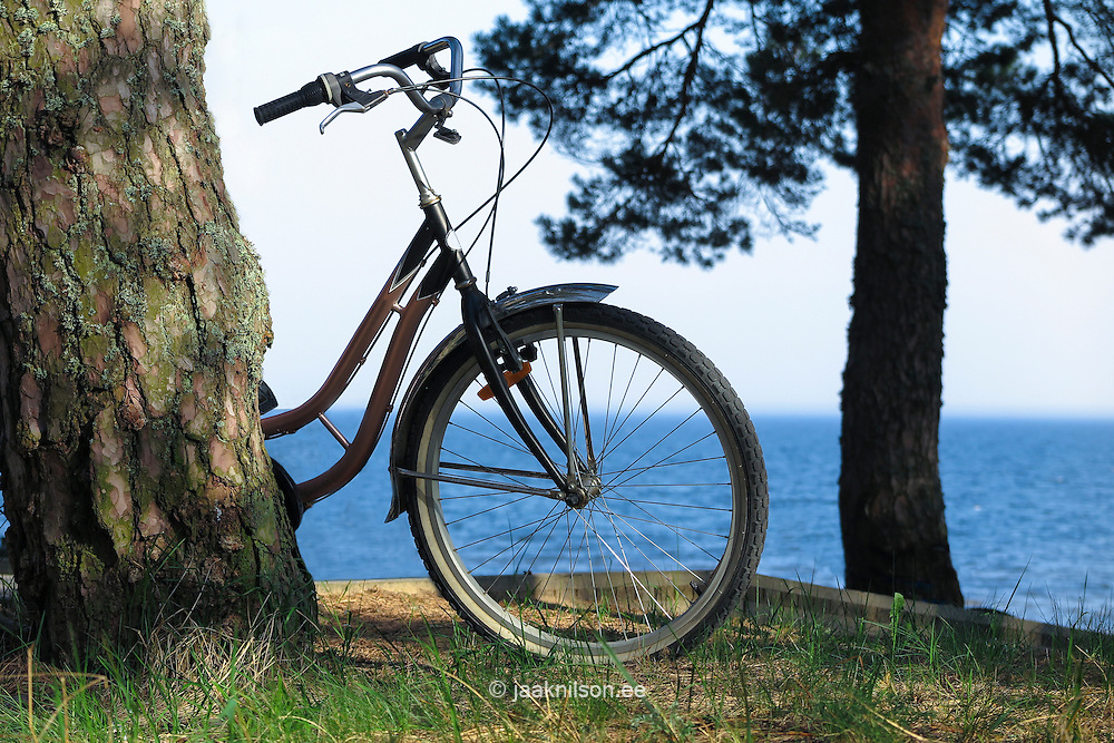 Parked bicycle leaning against tree trunk. Bike wheel, trees, water.