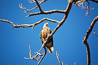 Bald eagle in Lee County, Fl near the Estero River. I got completely shredded by briars while getting close enough for this shot!