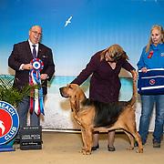 Long Beach Kennel Club 01/11/2020