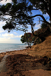 NEW ZEALAND WAHANGAPARAOA 13DEC07 - Coastline on Wahangaparaoa peninsula north of Auckland...jre/Photo by Jiri Rezac..© Jiri Rezac 2007..Contact: +44 (0) 7050 110 417.Mobile:  +44 (0) 7801 337 683.Office:  +44 (0) 20 8968 9635..Email:   jiri@jirirezac.com.Web:    www.jirirezac.com..© All images Jiri Rezac 2007 - All rights reserved.