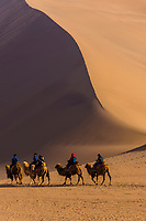 A camel caravan, Singing Sand Mountain (sand dunes) along the Silk Road, Dunhuang, Gansu Province, northwestern China, at the edge of the Gobi Desert.
