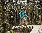 Carol ascends boardwalk steps in a lush lichen-covered dwarf forest on Tuatapere Hump Ridge Track, in Fiordland National Park, South Island, New Zealand. In 1990, UNESCO honored Te Wahipounamu - South West New Zealand as a World Heritage Area. For licensing options, please inquire.