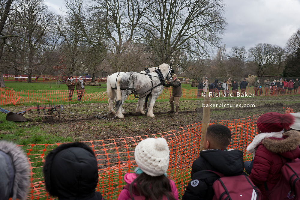 Irish ploughman Tom Nixon leads Shire horses Nobby and Heath as they plough an on-going heritage wheat-growing area in Ruskin Park, a public green space in the borough of Southwark, on 9th February 2018, in London, England. The Friends of Ruskin Park are again growing heritage wheat and crops together with the Friends of Brixton Windmill and Brockwell Bake Association. Shire horses are descended from the medieval warhorse but are a breed under threat. Operation Centaur, which maintains the last working herd of Shires in London is dedicated to the protection and survival of the breed. It is an organization set up to promote the relevance of the horse as a contemporary working animal in partnership with humans. This takes the form of heritage skills in conservation and agriculture, transportation, discovery, learning and therapy.