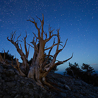 Finally I was able to return to the White Mountains. Every year I make the trek up into the White Mountains to photography the bristlecone pines. Some of these trees are over 5,000 years old. I hiked over a ridge and found this great tree over looking the ridge. Who knows how long it's been standing there. I have to admit it's a little bit eerie to be up there all alone and then to gaze up at the stars as the day transitioned to twilight and realize how small we really are.