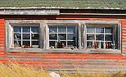 Old bottles on window sill of old farm building<br /> Laverna<br /> Saskatchewan<br /> Canada