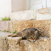 Cat resting on a doorstep in the Plaka neighborhood of Athens, Greece