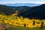 Fall color aspens in North Canyon on the way to Marlette Lake, with Lake Tahoe background