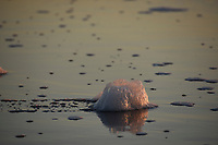 Foam at the shore line at sunset