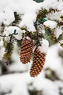 20151111 Fall Snow