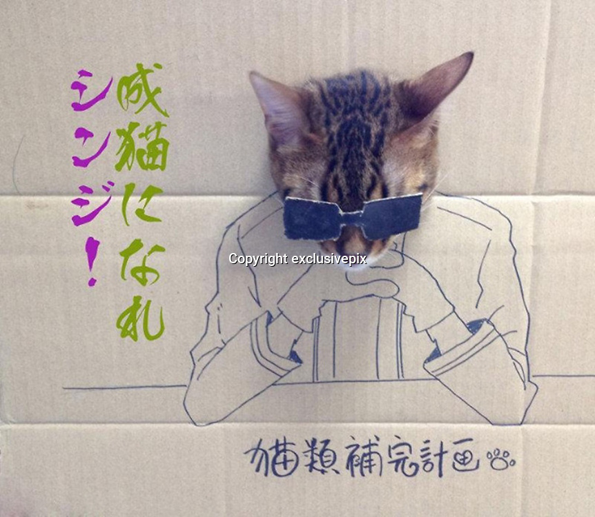 Hilarious photos of cats sticking their heads through holes in cardboard drawings of astronauts, dinosaurs and even Super Mario<br /> <br /> Putting your head through a hole in a cardboard cutout can be an amusing photograph opportunity for human beings - but now a new internet trend is letting our feline friends in on the act.<br /> This set of images shows how a series of cats have been indulging in cardboard art with hilarious results, with one cat transformed into a beefcake, while another rides a broom like a witch.<br /> One owner creates an astronaut design for their favourite moggie and a cat is turned into classic video game character Super Mario. In another funny snap a cat dons a pair of sunglasses.<br /> Another resembles an Indiana Jones-type character and others include a pet with a glass of wine and as a dinosaur. The pictures were uploaded onto the Sad and Useless blog and became an online hit.<br /> &copy;exclusivepix
