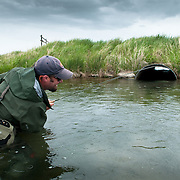 A fly fisherman tries to land a trout that has taken cover in a culvert on McCoy Spring Creek in southwest Montana.