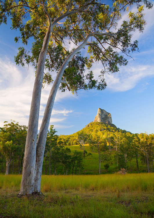 The striking Mt Coonowrin, also know as 'Crookneck' in the heart of the Glass House Mountains, is framed here by a leaning white gum tree while the low evening light shines on its volcanic peak.