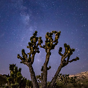 Far past the mountain line of Las Vegas one can find a dark night sky.  I was amazed to find that I could make out the faint band of the Milky Way with the naked eye.  Growing up in the desert, I had always wanted to get a shot of a Joshua tree and what better way then to frame it with then the majesty of the Milky Way galaxy.