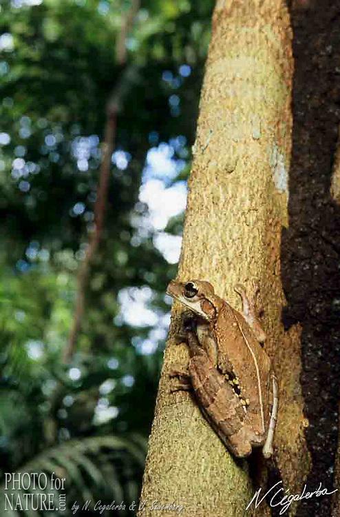 Trésors d'Amazonie  -  Tirage 66 x 100 cm sur PVC 5 mm
