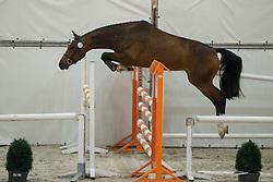 106, Happy Zenzi GR<br /> Vrijspringen Nationale Merriekeuring, 3 jarige springmerries <br /> KWPN Paardendagen Ermelo 2015<br /> © Hippo Foto - Dirk Caremans