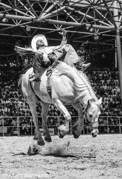 Bucking Bronco, Cloverdale Rodeo, Cloverdale, British Columbia, Canada, June 1988