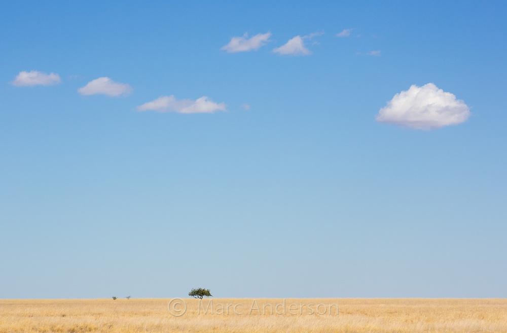 Dry grasslands and a blue sky with clouds in a remote part of outback Queensland, Australia