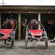 Horse and carts are prepared in the stable area during the Winton Harness Racing Club Race meeting at the Central Southland Raceway, WInton, Southland, New Zealand. 10th February 2012. Photo Tim Clayton