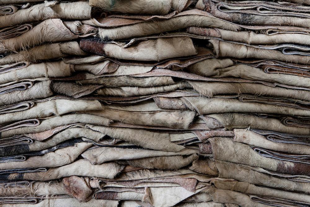 Santa Croce Sull'Arno, Italy. Bonistalli & Stefanelli SPA, hides and skins tanning.Unrefined hides department, detail.