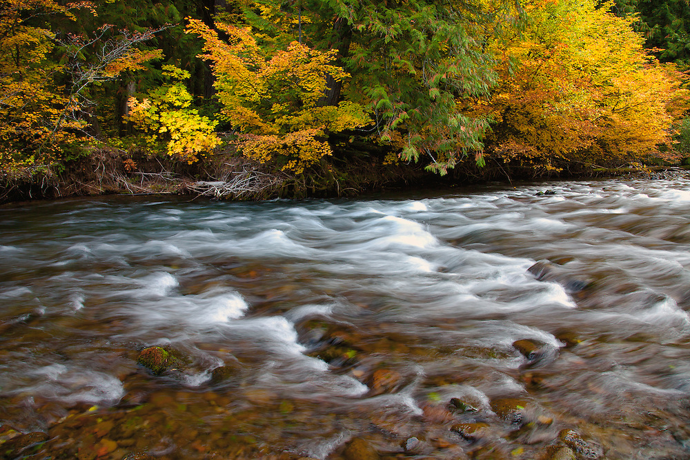 The cold-toned waters of southern Oregon's Umpqua River contrast against the golden autumn foliage on its banks.