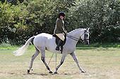 Class 49 - Ridden Hunter Horse