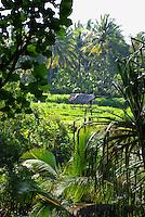 Idyllic rural scene near Manggis, Bali, Indonesia.