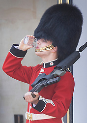 © Licensed to London News Pictures. 25/06/2020. London, UK. A member of The Coldstream Guards, on duty at Buckingham Palace, takes a drink of water during the extreme heat of the afternoon. High temperatures and sunshine are expected in most of the UK over the next few days. Photo credit: Peter Macdiarmid/LNP