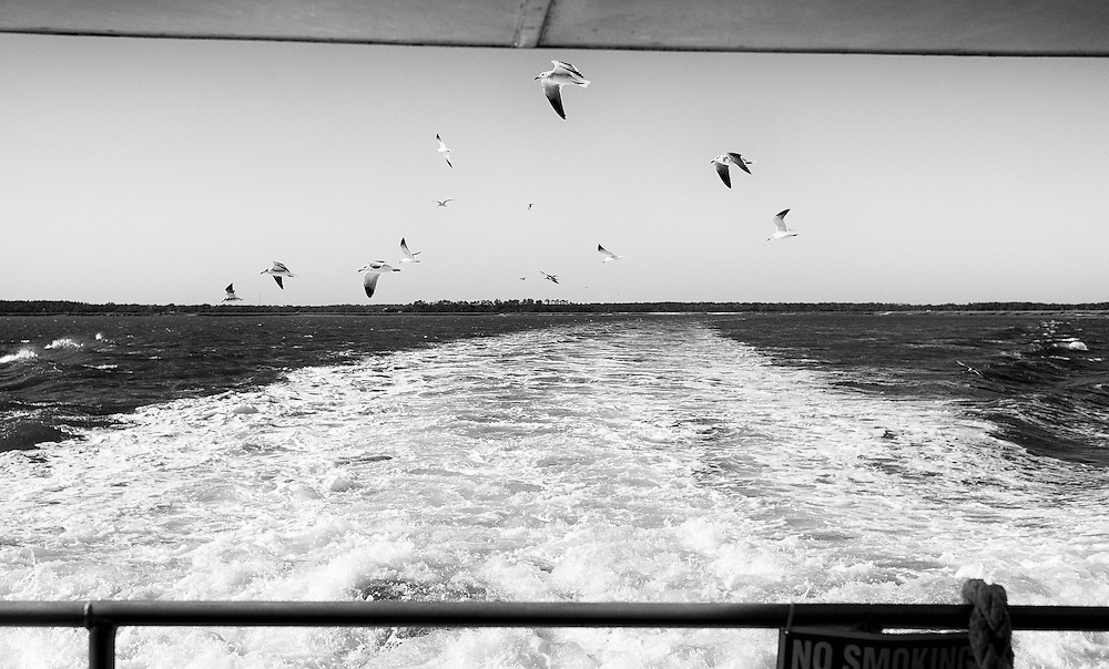 Gulls chase the state run ferry as it makes the twenty-minute trip from the Sapelo Island Visitors Center, on the mainland about seven miles away to the island. Sapelo Island is a barrier island located in McIntosh County, Georgia. The island is reachable only by airplane, to a small private airport run by the state of Georgia, or by boat.