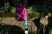 A pink duster and paint brush dry in morning village sunlight, on 26th May, 2017, in Termes, Languedoc-Rousillon, south of France