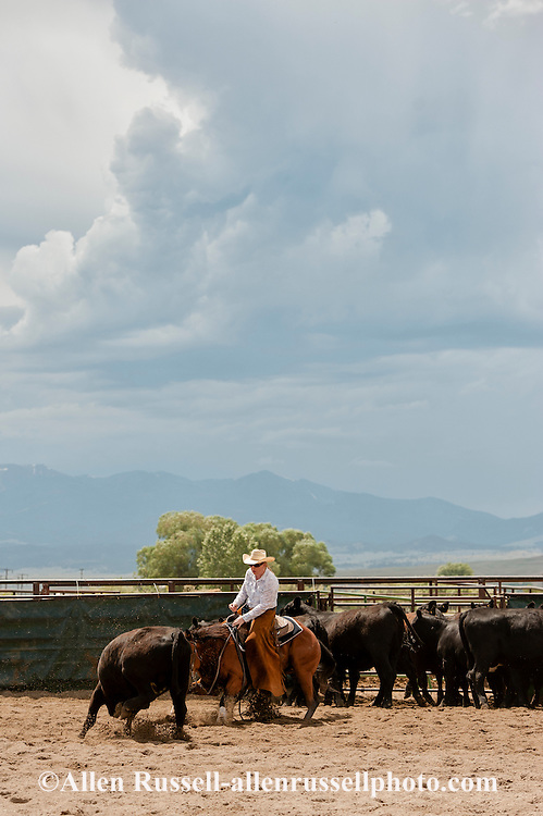 Cutting horses, cowgirl, Quarter Horse, Whitehall, Montana