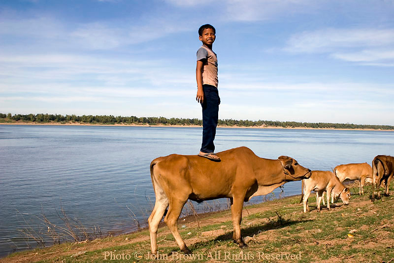 A young Asian boy is standing on top of a brown cow on the shore of the Mekong River in Kratie, Cambodia. Kratie is the home of the world famous but nearly extinct Irrawaddy dolphin, the only surviving fresh water dolphin in the world that inhabits the Mekong river 10 miles north of this point.