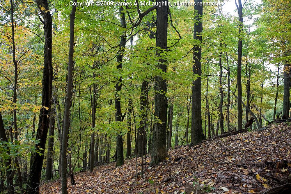 Hardwood Forest Virginia Oct 09 A Jpg James A Mclaughlin