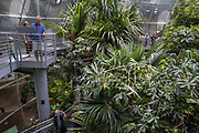 Interior view of the California Academy of Sciences Museum, Golden Gate Park, San Francisco, California, USA.