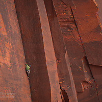 Indian Creek Crack Climbing