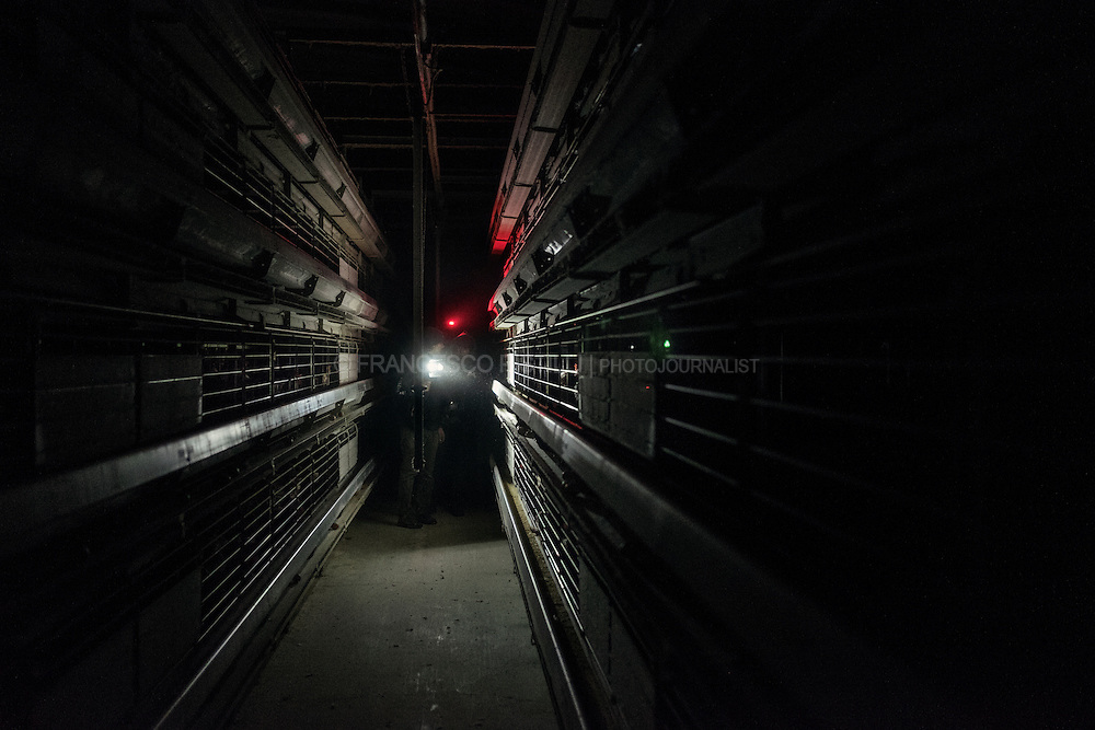 Activists during an investigation inside the eggs farming: eggs laid by caged hens. EA (EssereAnimali) crew is filming in a corridor thru hundreds of crowded cages.