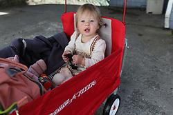 Gemma Marie Palmer at 14 months, Saturday, Oct. 20, 2018  at Huber's Farm in Starlight.